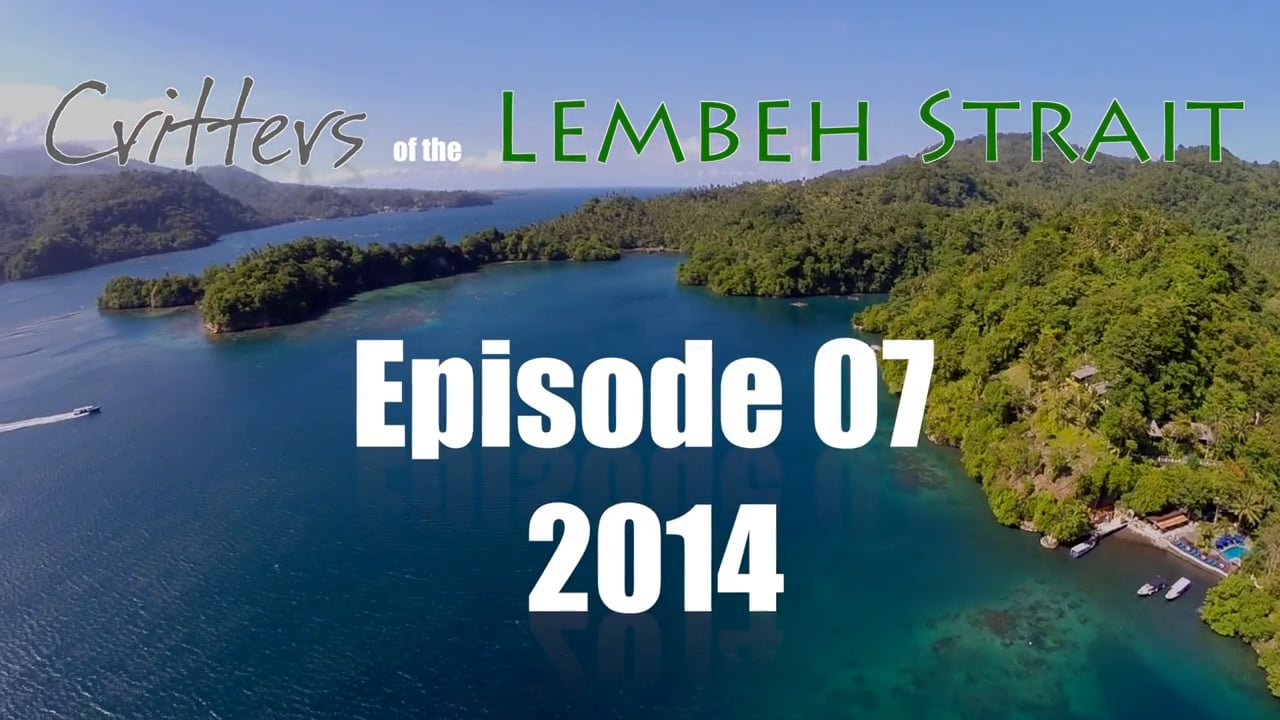 Critters of the Lembeh Strait   Episode 07/2014
