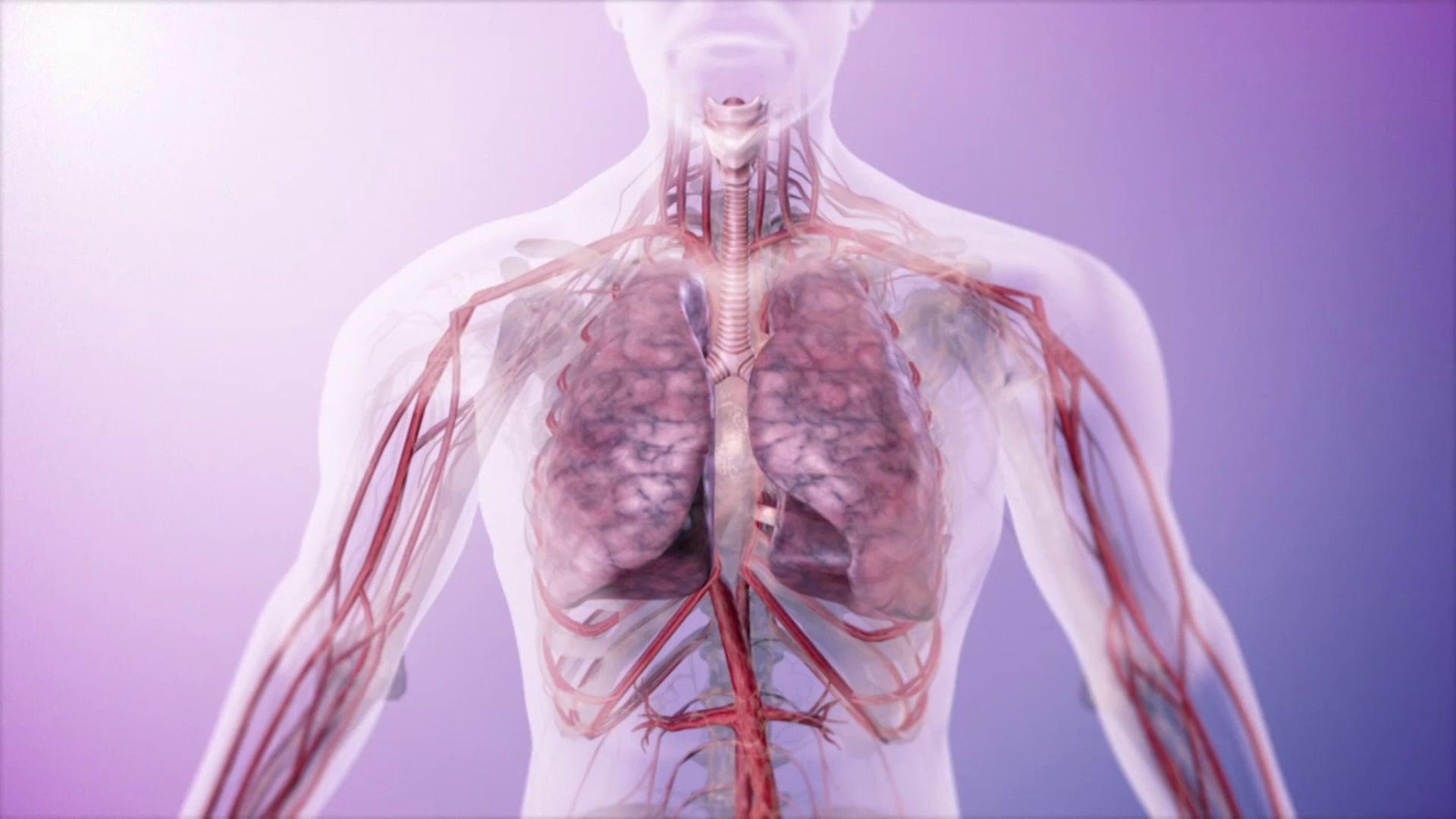 3M - Respiratório