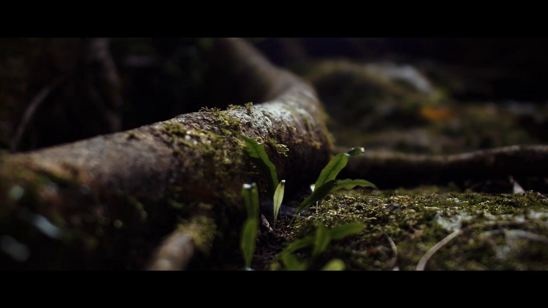 Overseafilms Nature