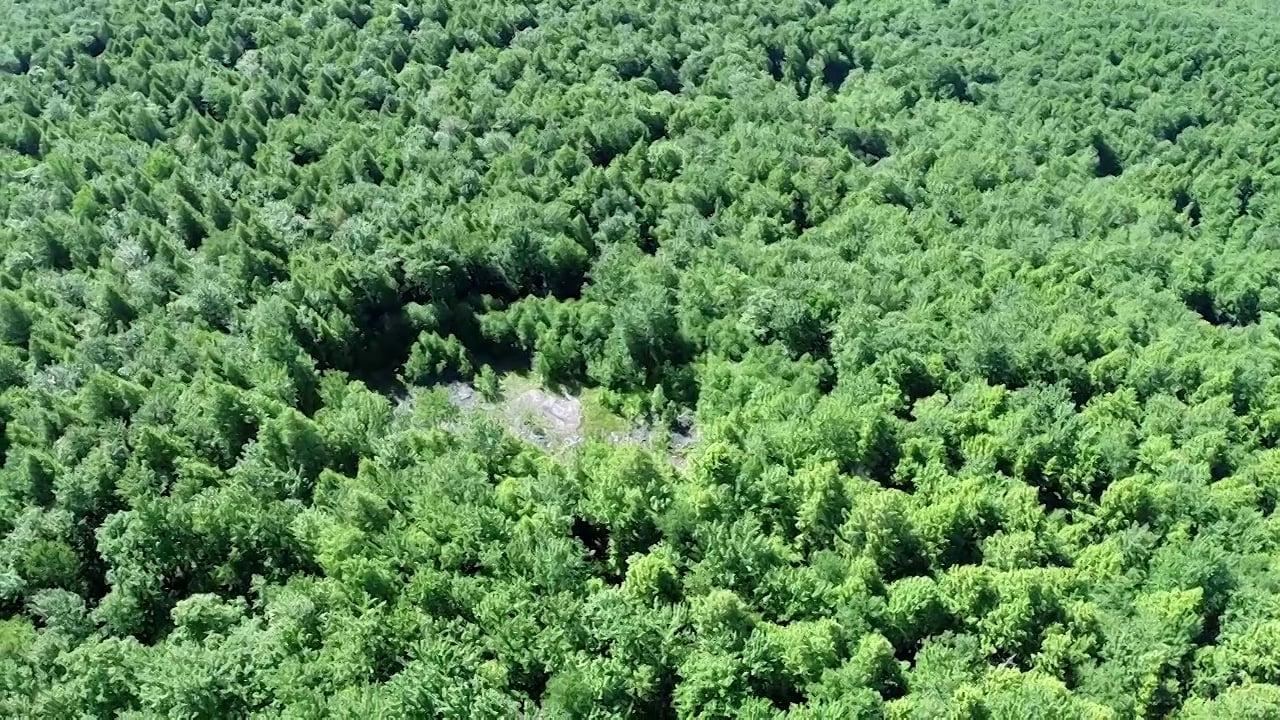 Fleischmanns Biomass Project