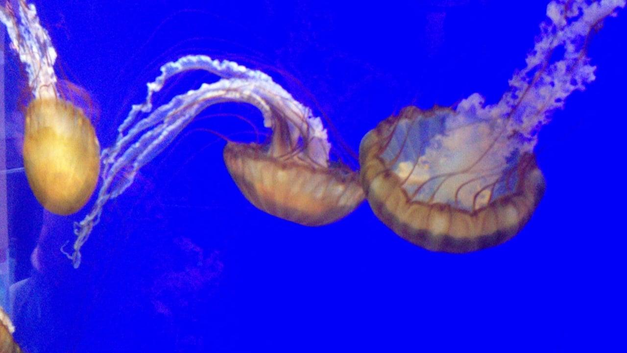 Jellies @ Oregon Coast Aquarium