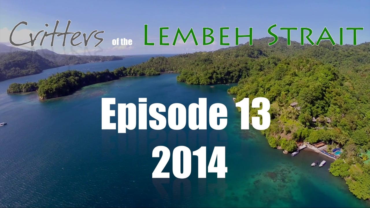 Critters of the Lembeh Strait   Episode 13/2014