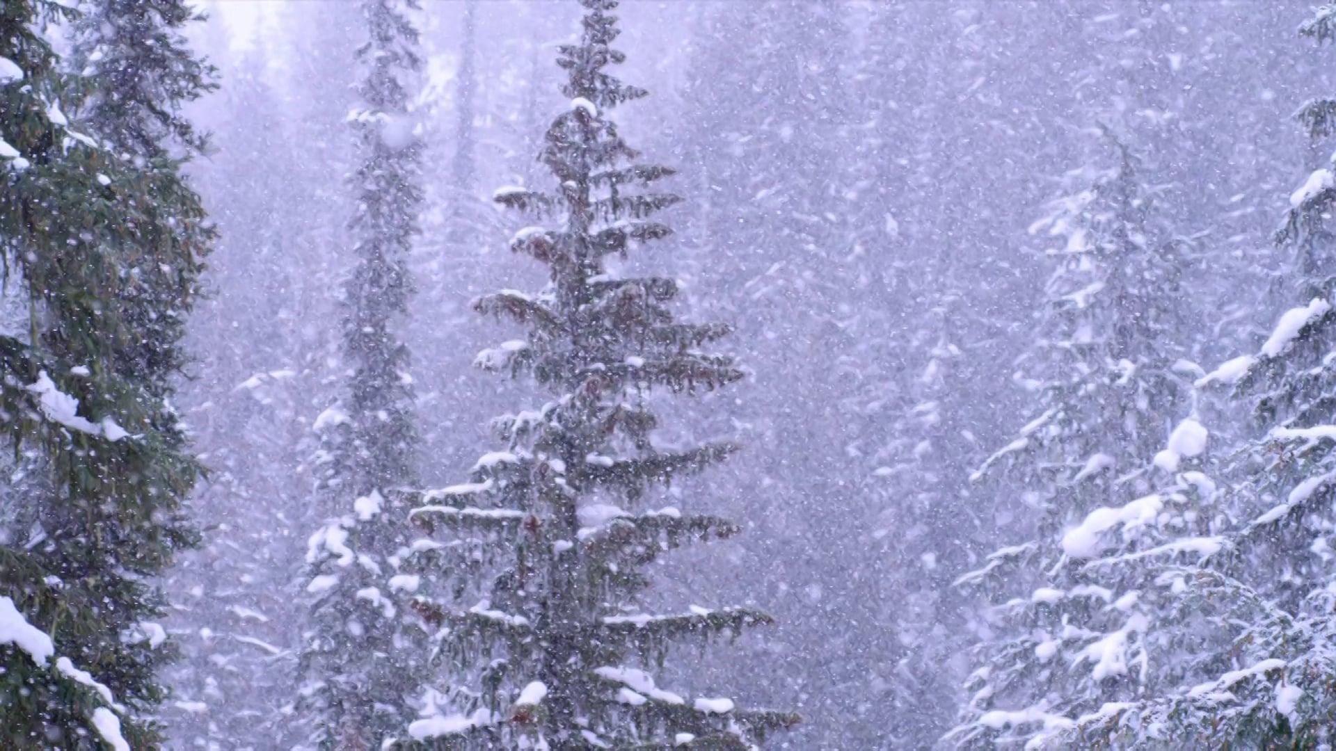 Pretty Faces Ski Film