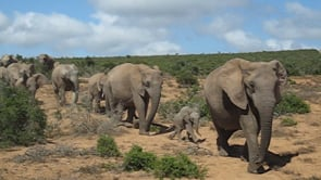 Tourist Videos - Africa