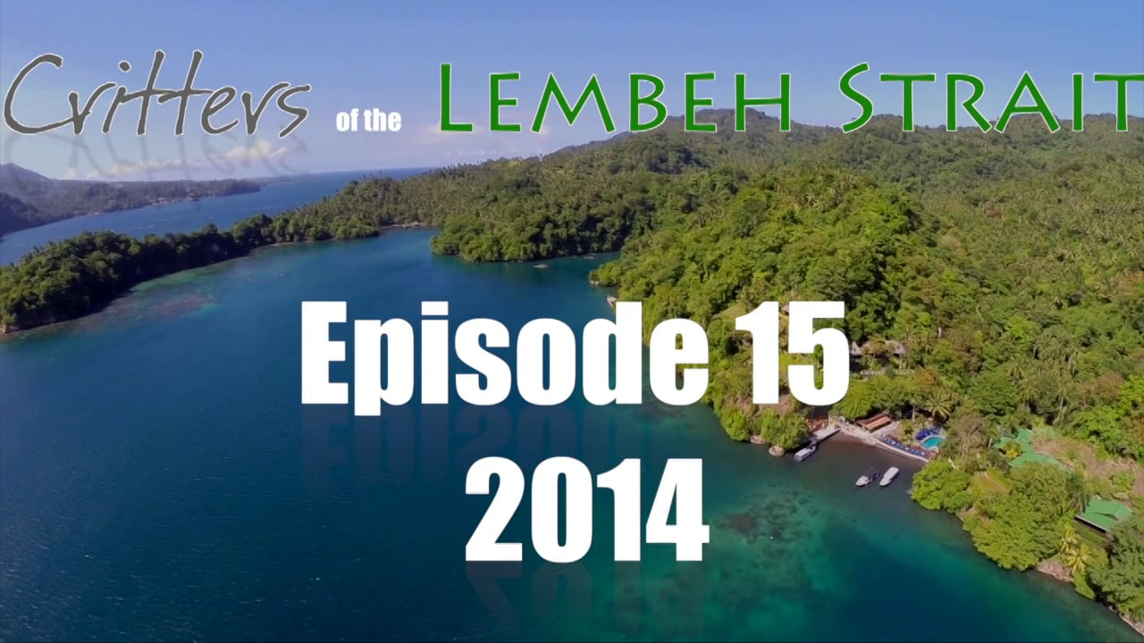 Critters of the Lembeh Strait   Episode 15/2014