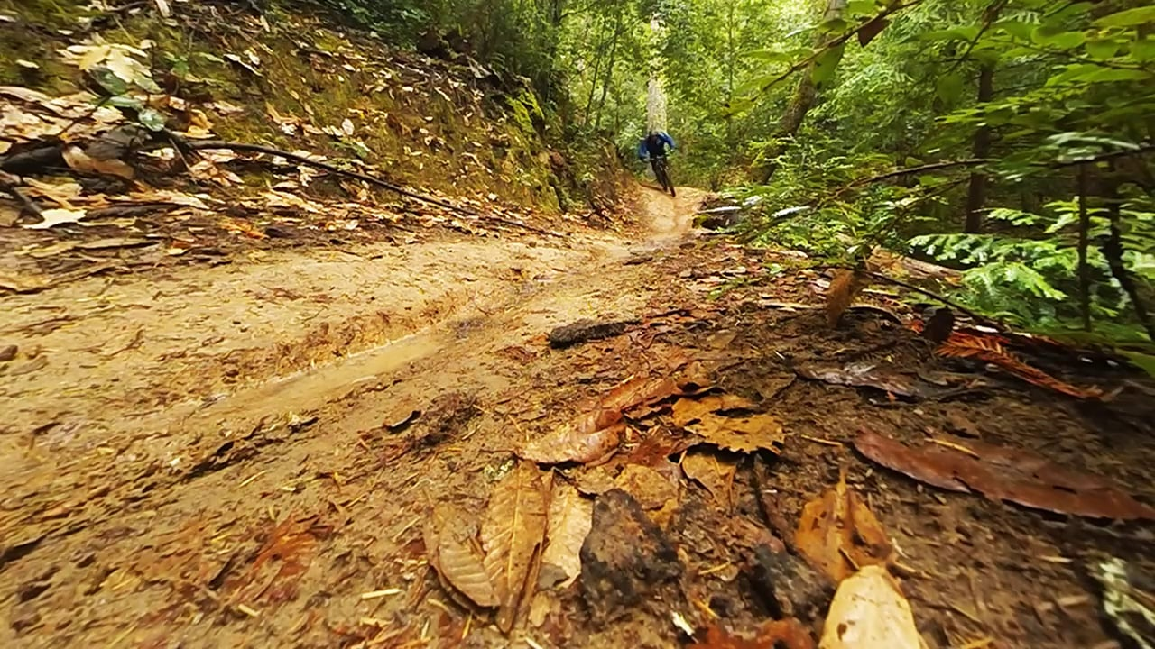 Redwood romp
