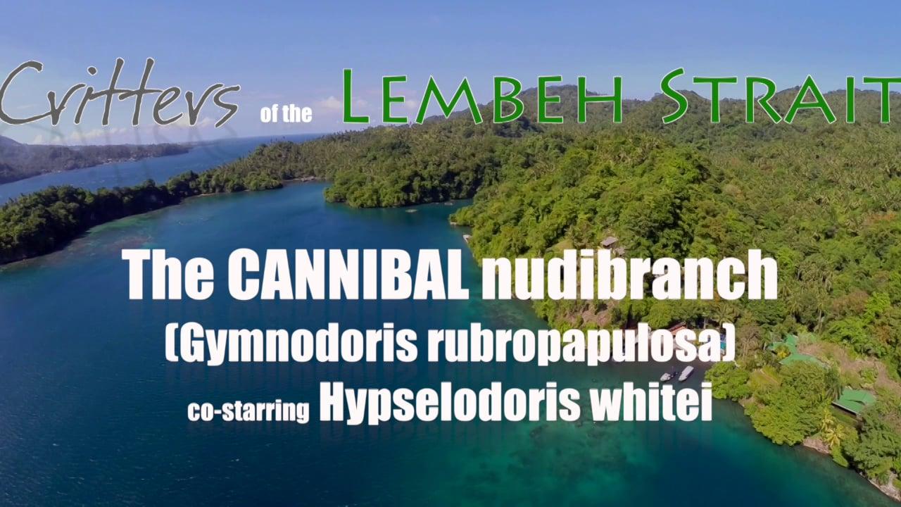 The Cannibal nudibranch - Gymnodoris vs. Hypselodoris