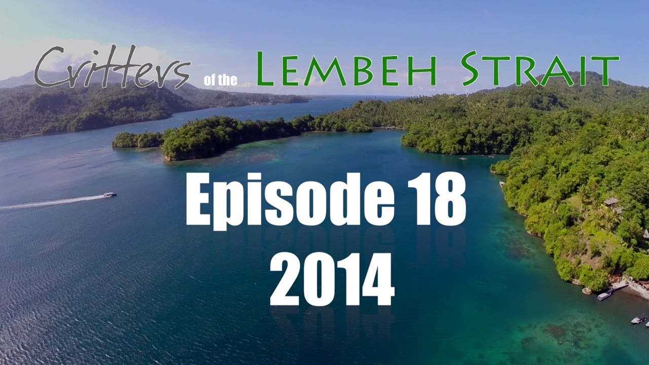Critters of the Lembeh Strait   Episode 18/2014