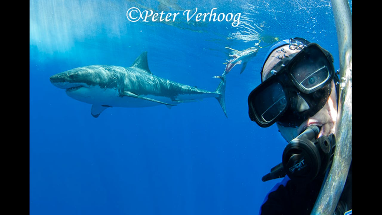 Great White Shark selfie at Guadalupe Mexico, 2014