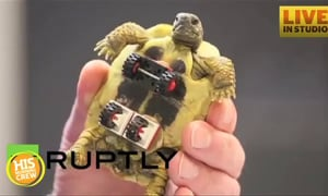 Disabled Turtle Gets Help From Legos