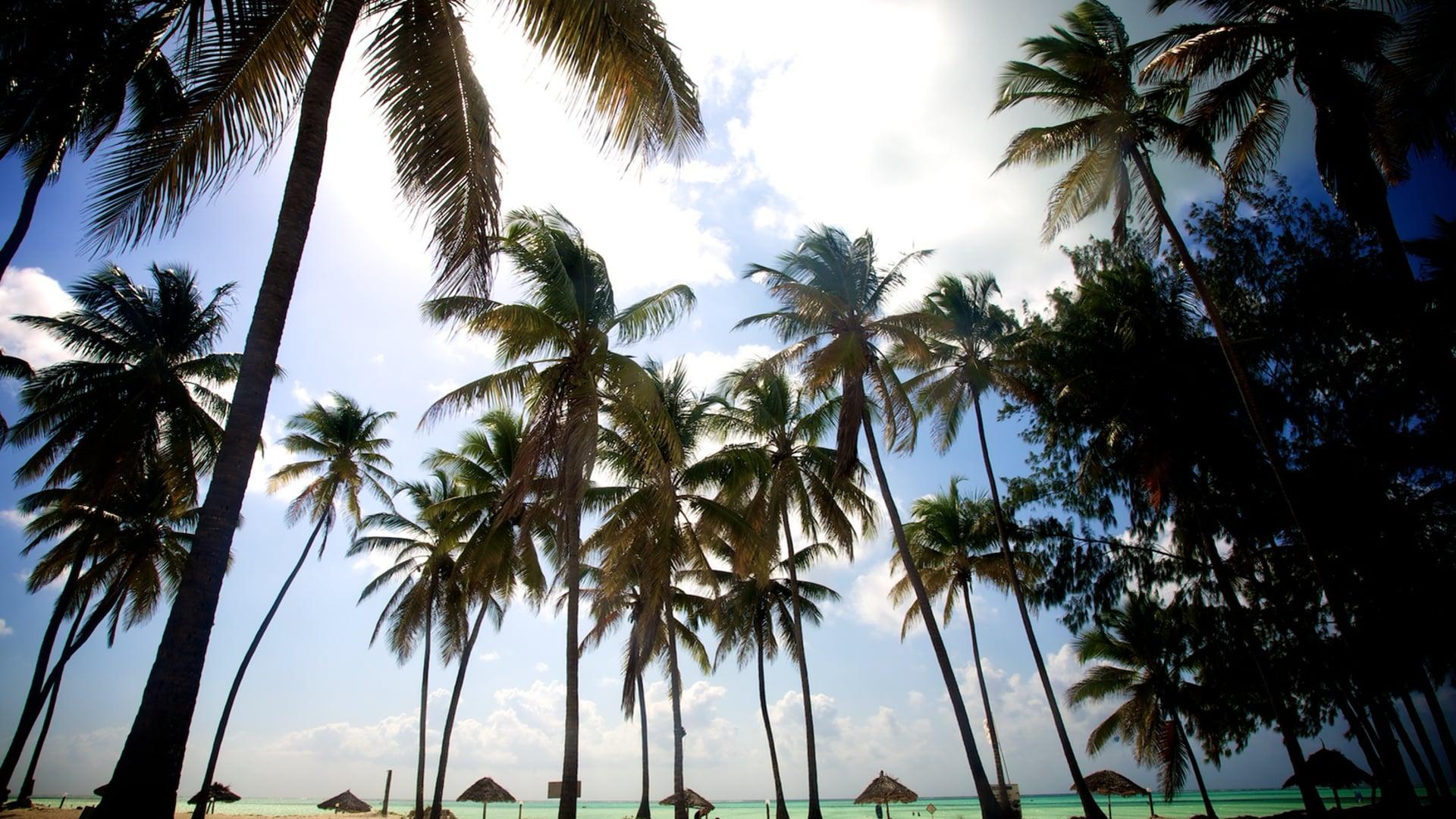 Zanzibar Kitesurf expedition Oria Asa