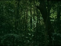 "Daniel Steegmann Mangrané,<em>16 mm,</em> 2008/2011,16 mm film,4'52""<br><br>"