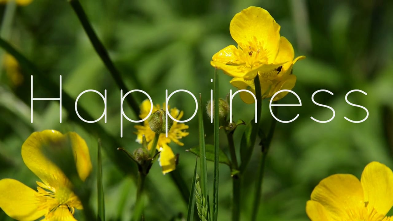 Soul Nutrition Happiness Film