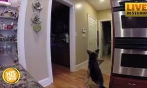Mom Scared by Stuffed Dog Prank