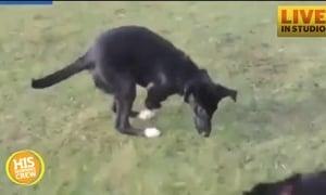 Dog Mistaken for Kangaroo