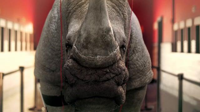 TNT Rinoceronte