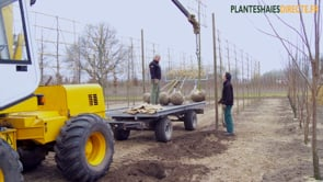 Van Roessel Plants