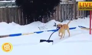 A Trick Everyone Should Teach Their Dog