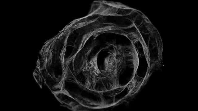 Strand Flower | Visual Lab