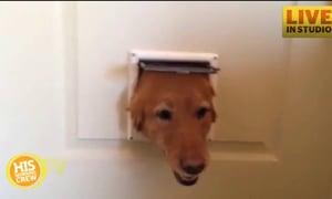 Dogs Take Turns Peeking