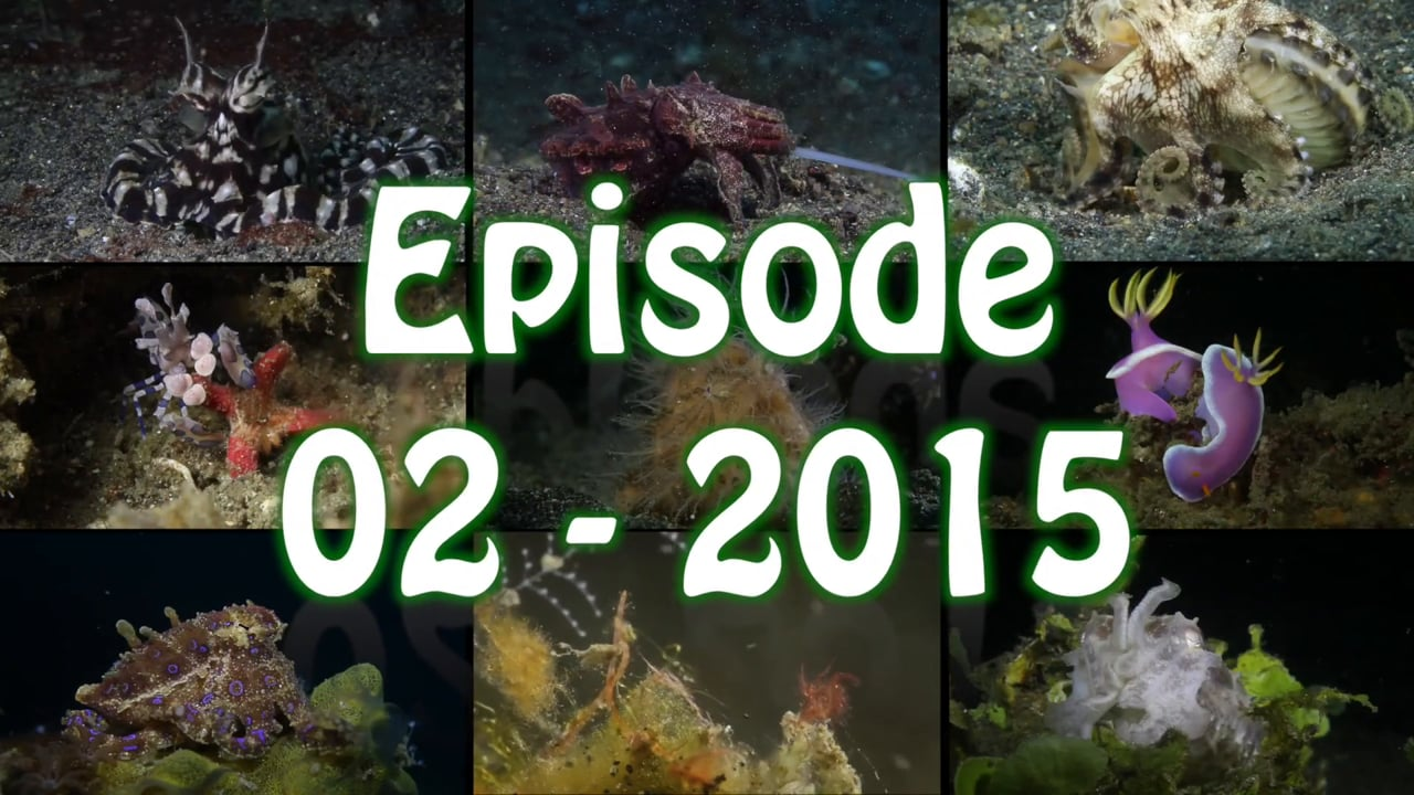 Critters of the Lembeh Strait   Episode 02 - 2015