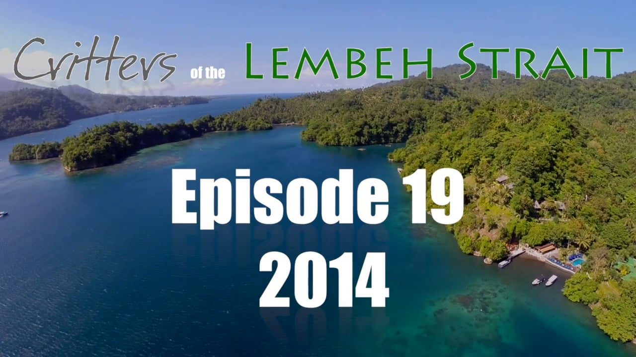 Critters of the Lembeh Strait   Episode 19/2014
