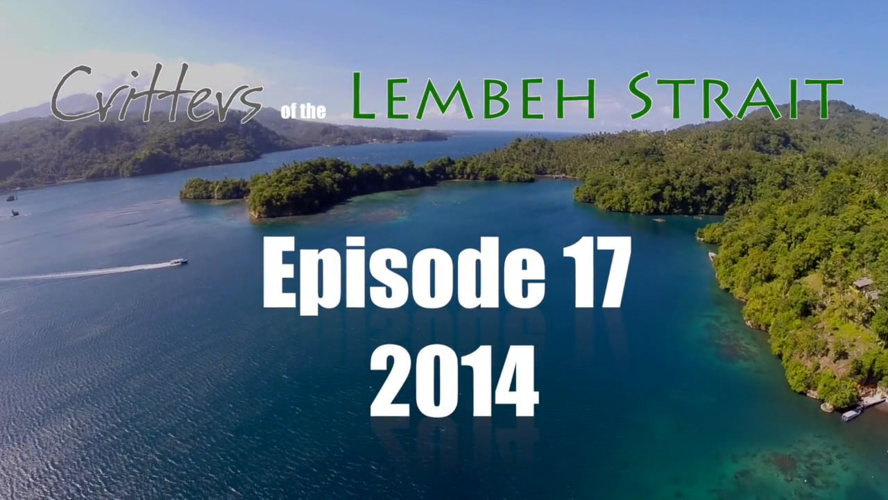 Critters of the Lembeh Strait   Episode 17/2014