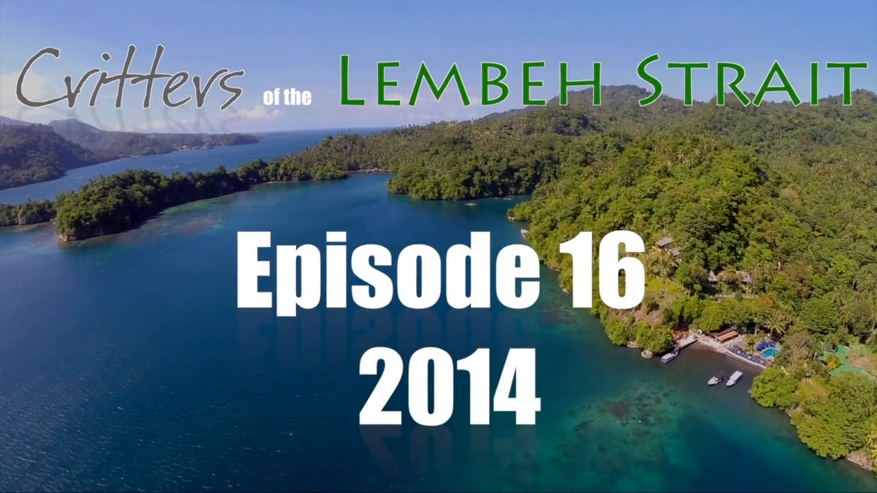 Critters of the Lembeh Strait   Episode 16/2014
