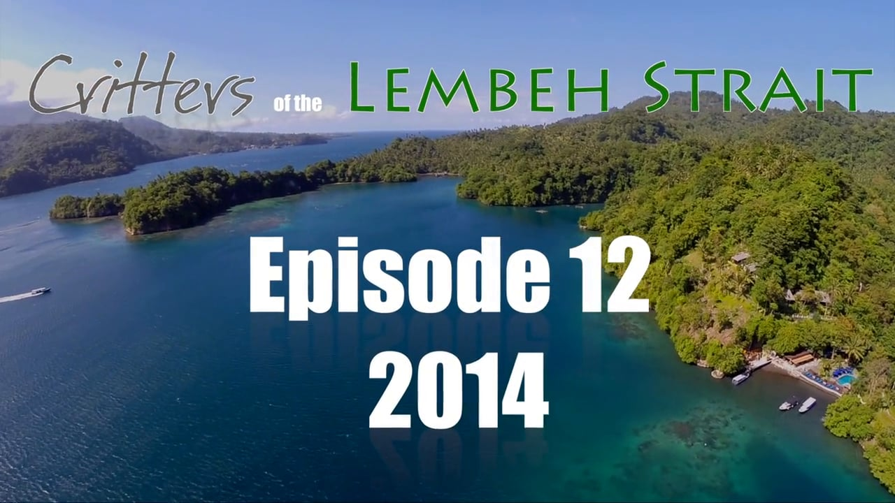 Critters of the Lembeh Strait   Episode 12/2014