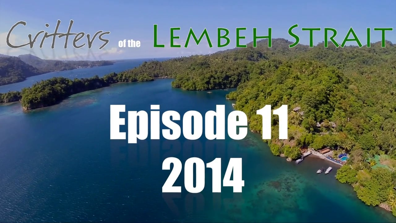 Critters of the Lembeh Strait   Episode 11/2014