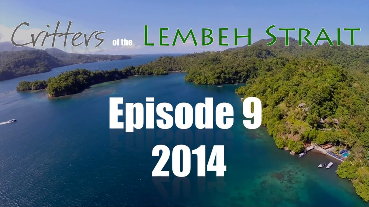 Critters of the Lembeh Strait   Episode 09/2014