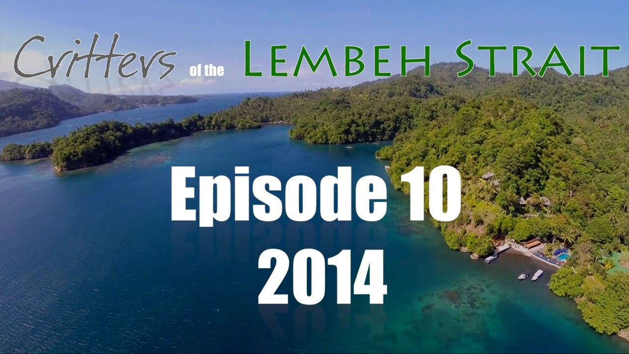 Critters of the Lembeh Strait   Episode 10/2014