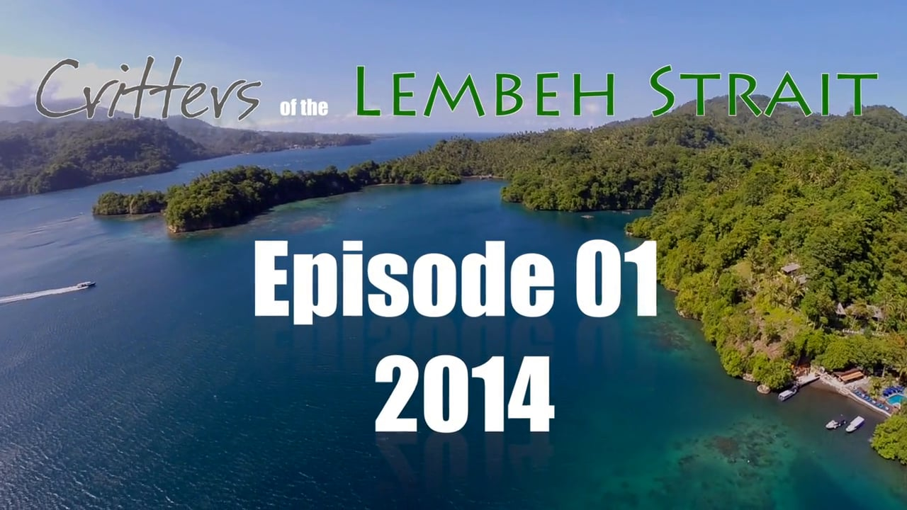 Critters of the Lembeh Strait   Episode 01/2014