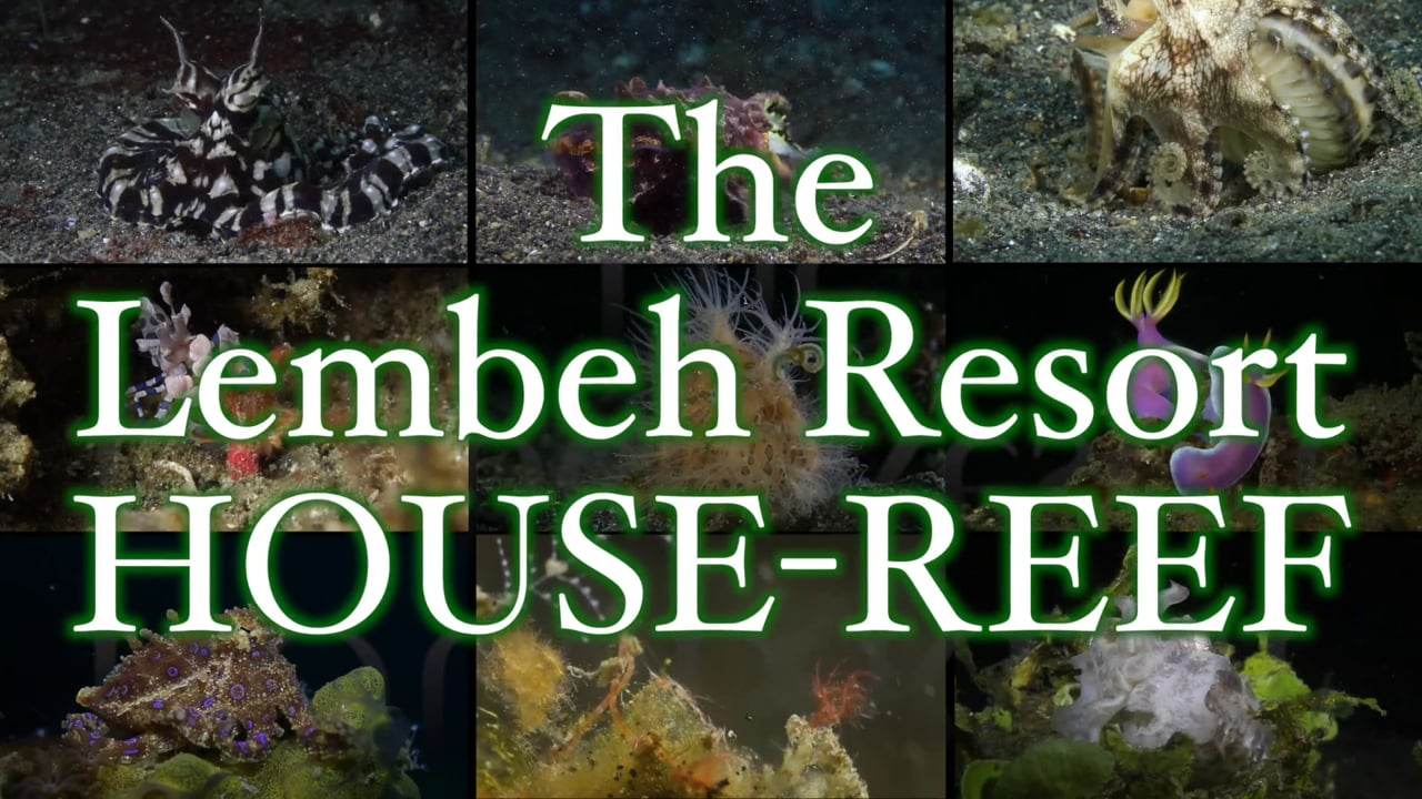 Critters of the Lembeh Strait   Episode 02/2014