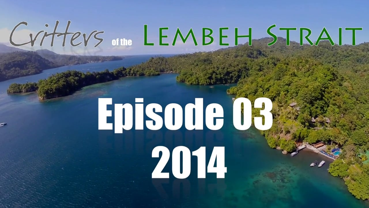 Critters of the Lembeh Strait   Episode 03/2014