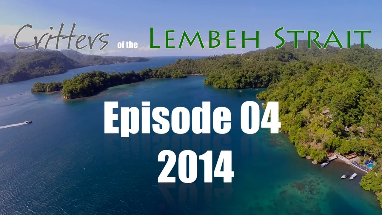 Critters of the Lembeh Strait   Episode 04/2014