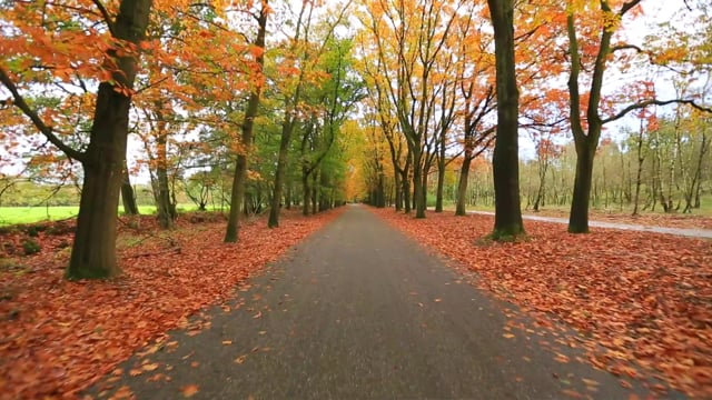 Virtual Cycle Rides - Through the Forest Relaxing Nature and Bird Sounds