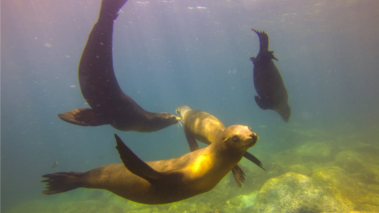 Moment with the sea lions