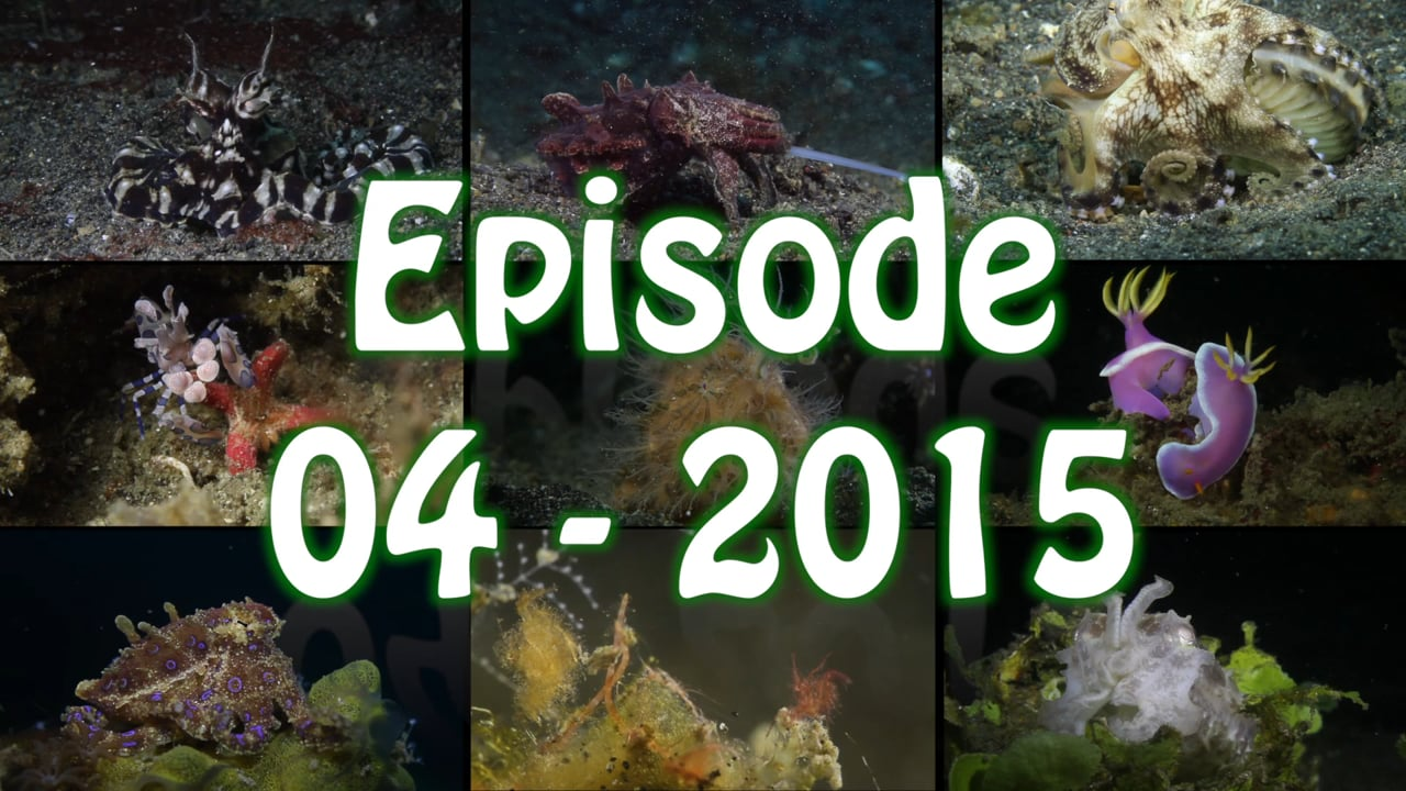 Critters of the Lembeh Strait   Episode 04 - 2015   March of the Nudis Part 2