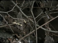 "Daniel Steegmann Mangrané,<em>Phasmides</em>, 2008/2012,16mm film transferred to HD video,22'41"""