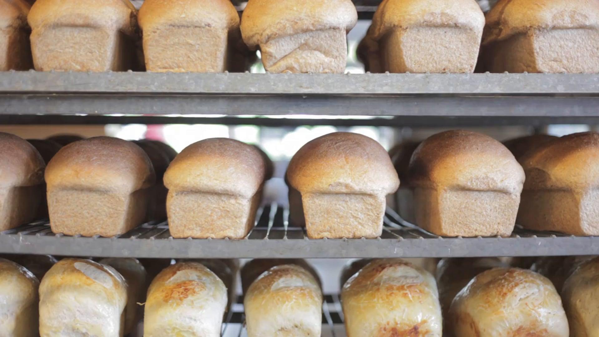 great harvest - meridian // fresh baked bread everyday!