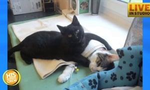 Nurse Cat Helps Sick Pets