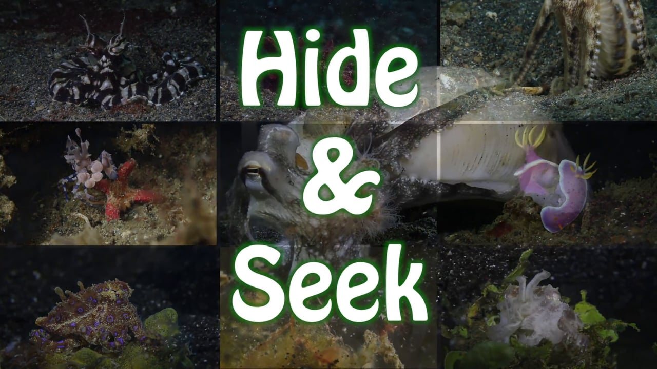 Critters of the Lembeh Strait   Episode 06 - 2015   Hide&Seek Part 1