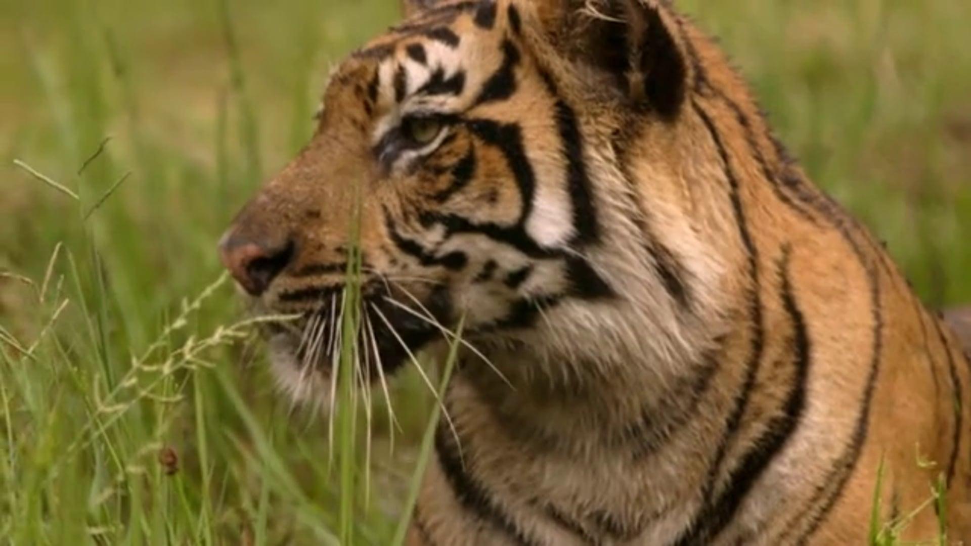 Tambling Wildlife Nature Conservation