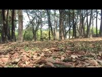 """Paulo Nazareth, <em>Gaiola,</em> 2005, video,7'08"""""""