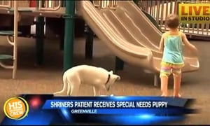 Dog Breeder Talks About Pup Born Without a Paw