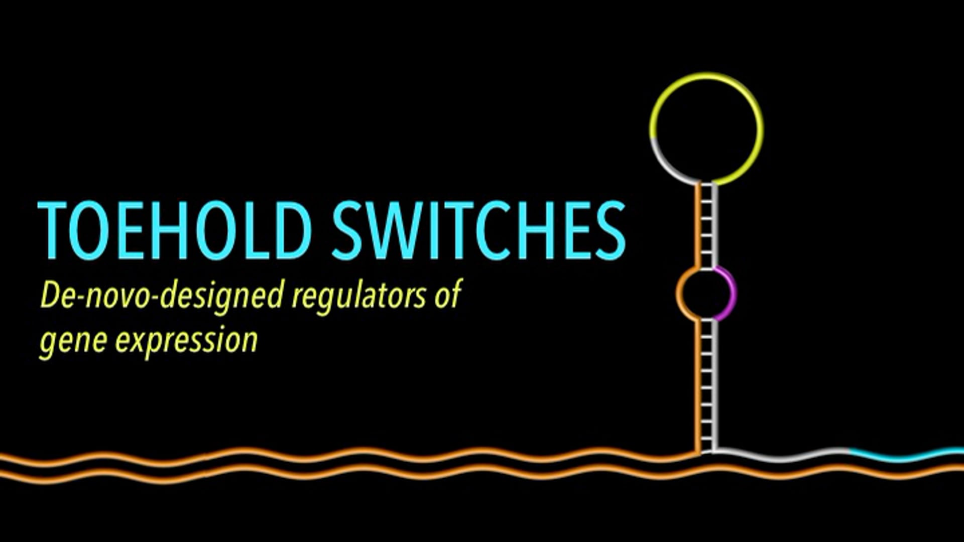 Toehold Switches