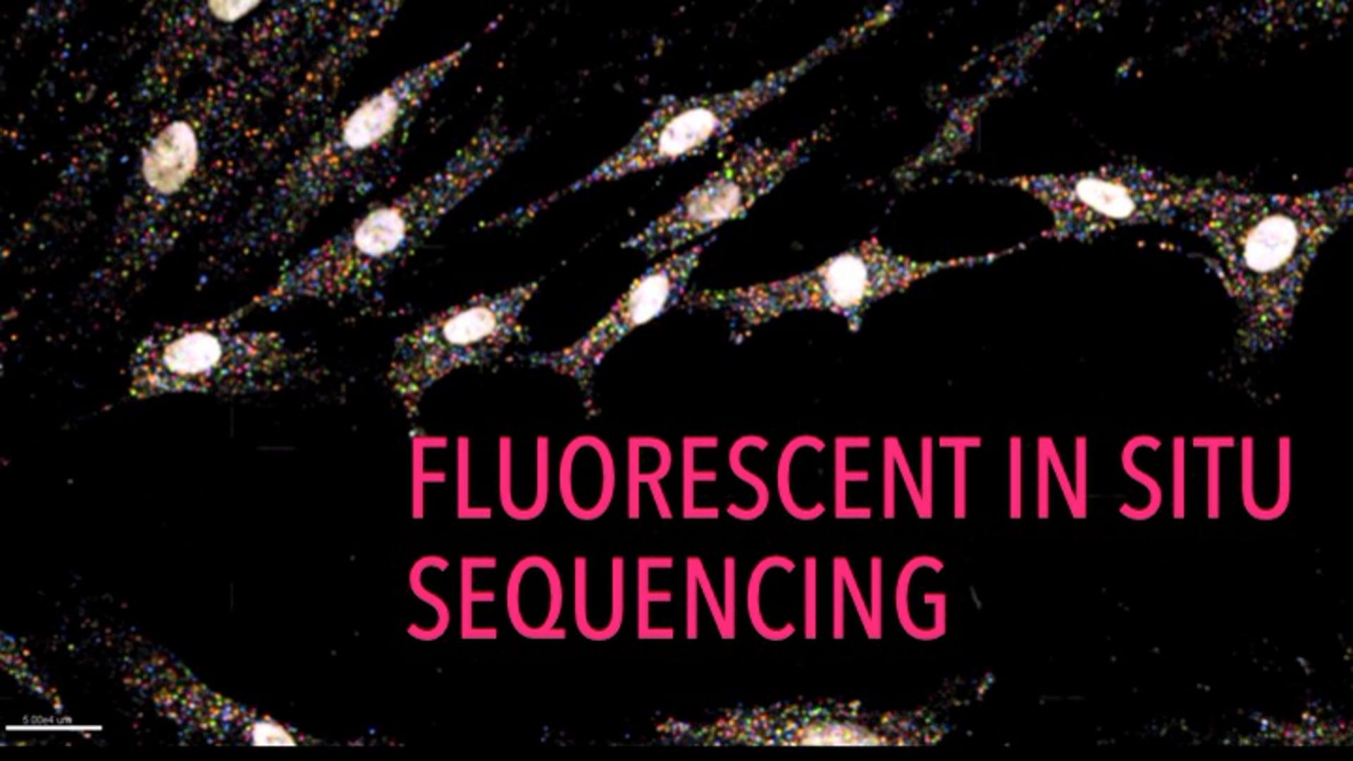 Fluorescent in situ Sequencing