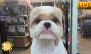 Dogs with Perfectly Square or Round Haircuts All the Rage