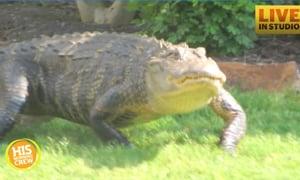 Gators in Myrtle Beach
